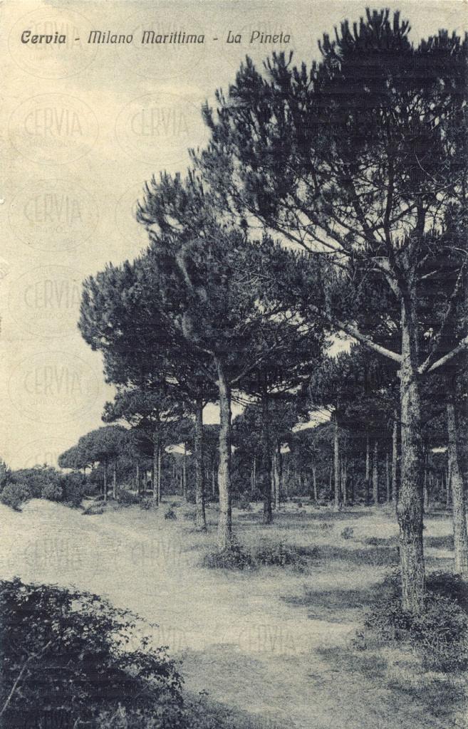 Cervia - Milano Marittima - La Pineta