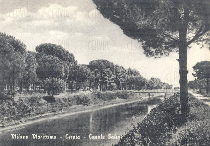 Canale Saline nella pineta