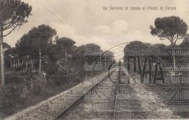 Cervia - Ferrovia in mezzo al Pineto