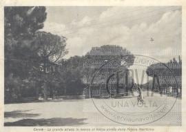 La grande strada in mezzo al bosco pineta della Milano Marittima