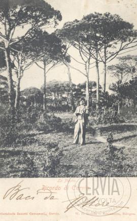 La Pineta - Ricordo di Cervia