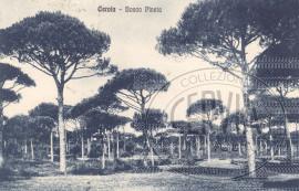 Bosco Pineta