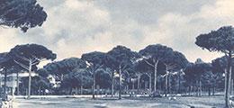 Milano Marittima Pineta